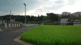 Photo_61