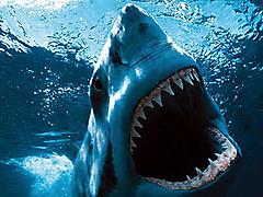 Shark_3