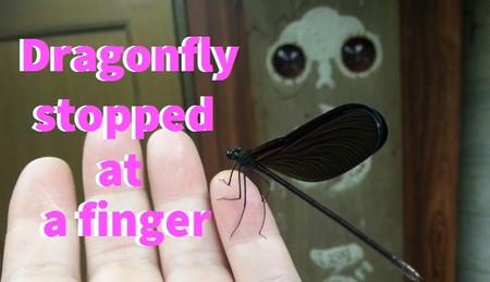 Tonbo_tonbo_doragonfly_doragonfly_a