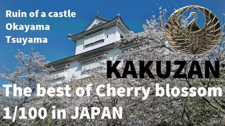 Bz_japan_okayama_cherry_blossom_s_2