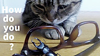 Stag_beetle_visited_my_house_my_cat