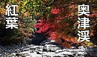 Beautiful_japan_okayama_leaf_in_aut