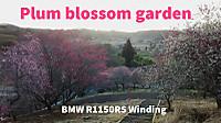 Pulm_blossom_garden_kurasiki_japan_